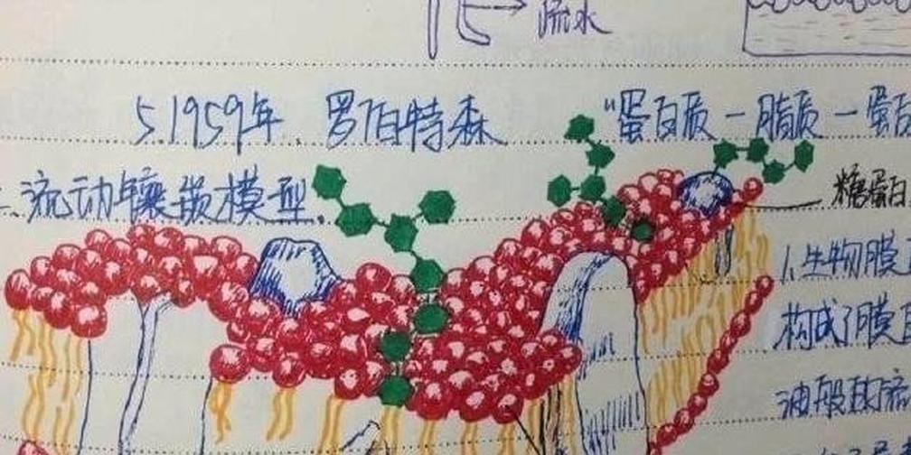 刚刚,上海交大最强学霸笔记展把我惊呆了