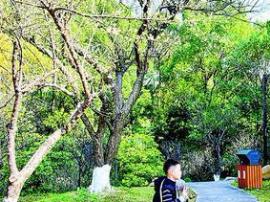美翻了!惠州罗浮山象头山等地梅花盛开,周末约起