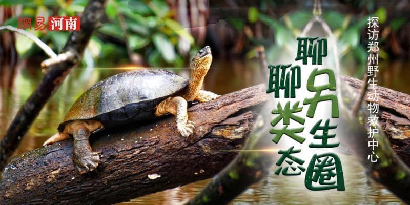 探访郑州市野生动物救护站 聊另类生态圈