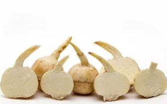 隔夜慈菇卖田也要食 慈菇有什么营养?