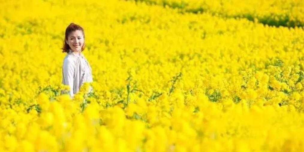 【旅游节特辑】状元故里满地黄 万亩花海浓郁香