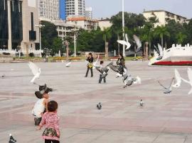 民族广场有人抓鸽子?疑似流浪精神病人
