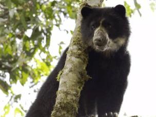 旅游时不幸遇见了熊 装死躲得过吗?