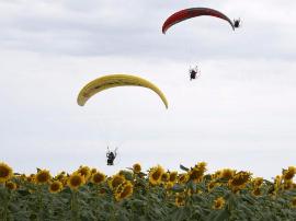 新疆福海县黄花沟万亩向日葵花盛开 十分壮观