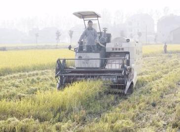 全省再生稻产业发展暨产销对接培训班在洪湖开班