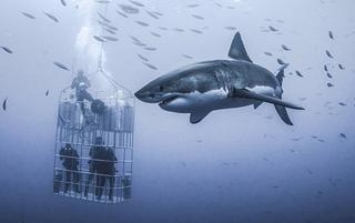 被鲨鱼环绕什么感觉