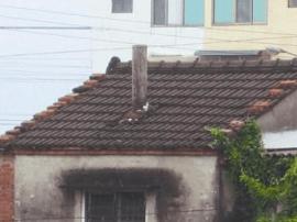 佛山某村居户主加装烟囱影响邻居 赔了1万医药费?