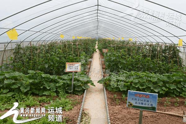 运城:芮城循环农业托起农民致富梦