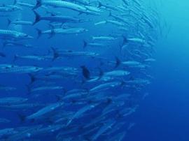 海洋科普进校园 市南区打造海洋教育特色体系
