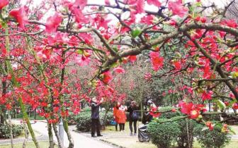 重庆各地春意渐浓 繁华盛开