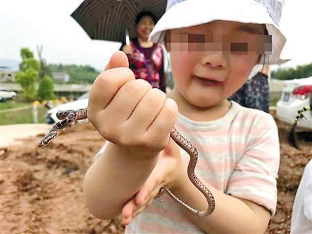 """""""虎爸""""捉毒蛇让4岁女儿把玩 零下30度走2小时"""