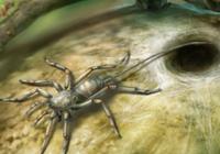 琥珀封存远古秘密:1亿年前的蜘蛛长着长长的尾