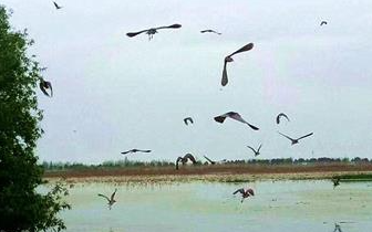 """潜江返湾湖湿地跑马 """"云梦""""重现 跑出生态大保护"""