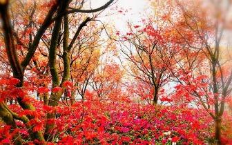 南湖红枫秒变三种色彩 树痴倾力打造美丽乡村