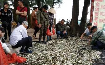 东兴京族渔民今年首次喜获丰收 满满的获得感