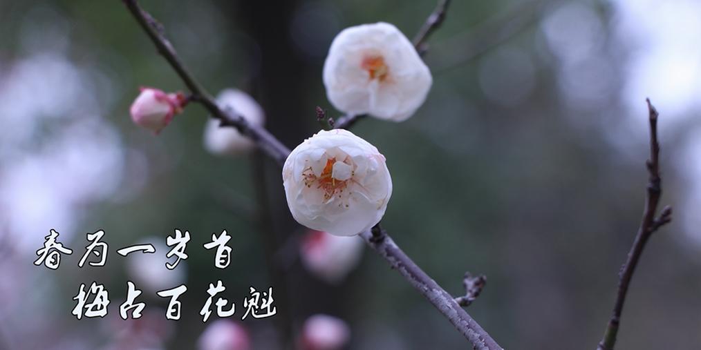 初春| 一树梅花依,含笑迎春到