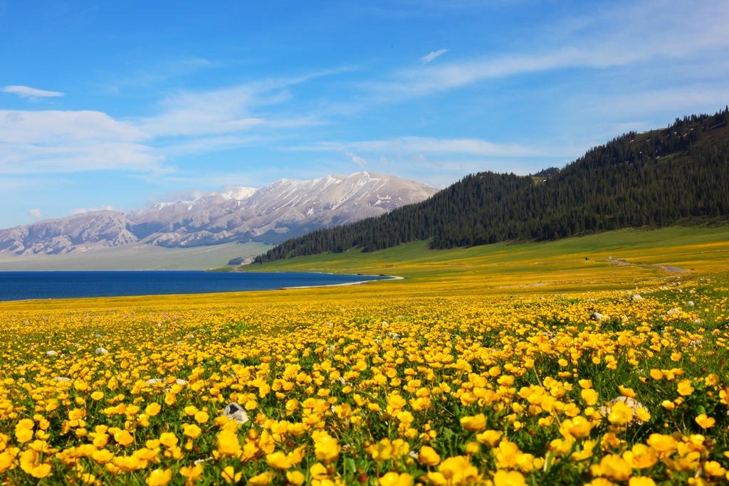 再过一个月 新疆这10个地方将花开成海