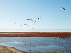 吉林莫莫格保护区:湿地旖旎秋色