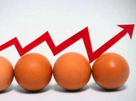 运城市鸡蛋价格最近上涨了 原因有三个