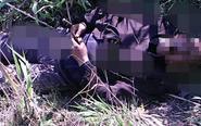 村民小树林发现男尸 死者身旁有农药瓶