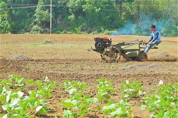 云南澜沧:科技进村 土地生金