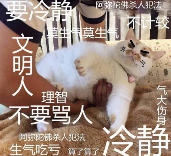 轻松一刻:谁能告诉我陈志朋究竟发生了什幺? 作者: 来源: