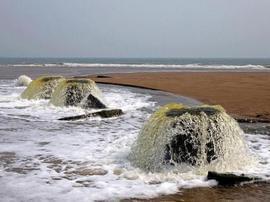 """青岛海滩惊现""""蘑菇""""泉 形似超大号香菇"""