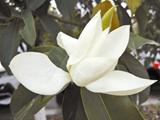 甬城进入花期最盛时节 上百种花儿等您来赏