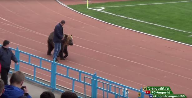 俄罗斯联赛借熊暖场引争议 相关组织:这么做不人道