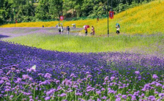 南川打造浪漫赏花季 全年耍事多
