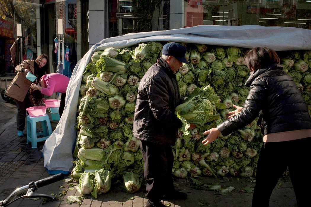 直到如今,依然有老人喜欢冬天囤白菜。/纽约时报