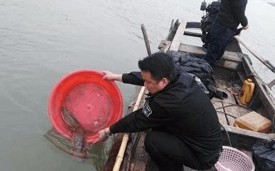 长江荆州段多次现娃娃鱼 专家:水质逐年好转