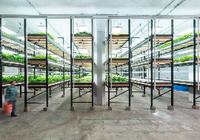 外媒:城市农场是农业未来,以后可随地培育农产