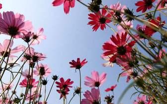 东莞:若要不负春风,去踏青赏花吧!