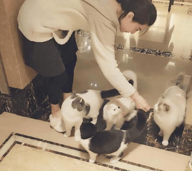 """""""铲屎官""""范冰冰悠闲喂猫 网友调侃:李晨呢"""