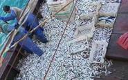 渔船2小时白捡近万公斤鱼