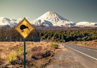 """拯救""""鸮鹦鹉""""的野心大计:新西兰灭鼠大战能成吗?"""