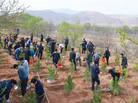 东营将启动三年国土绿化行动 这些工程重点