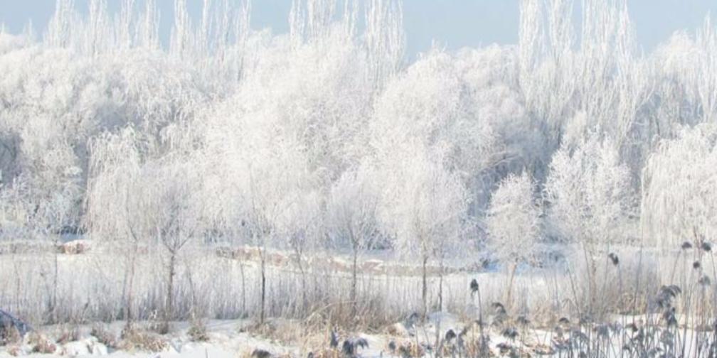 雾凇冰花将新源县装扮成琉璃世界