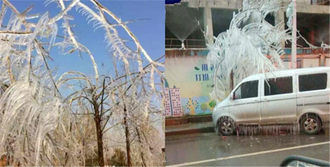 """冷冷冷!郑州街边树木冻成""""冰棍儿"""""""