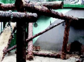 搭攀爬架配备玩具  太原动物园金钱豹生活更幸福