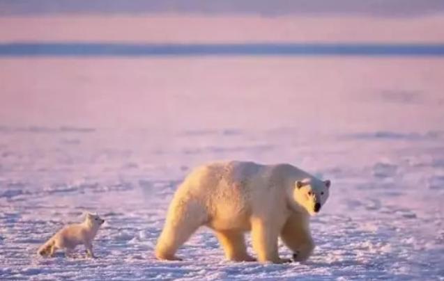 世界上唯一禁止死亡的地方 北极熊比人还多
