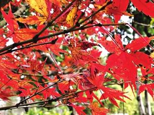 美景:冬日西湖公园 红花红叶暖人心