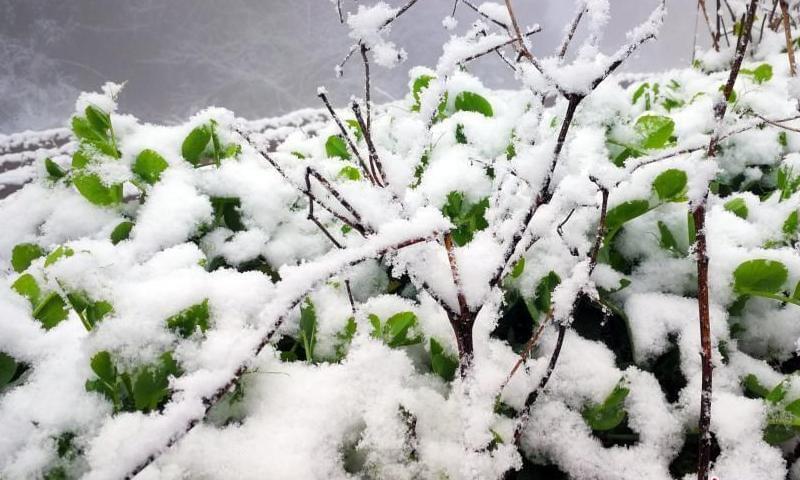 """三峡库区湖北夷陵迎""""春雪"""" 风景如画"""