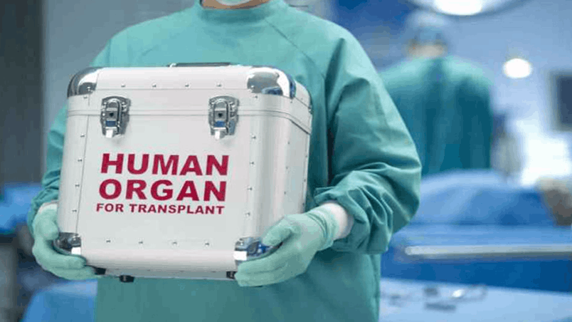 活体肾脏器官交易合法化模式值得效仿吗