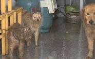 男子车库内养9条狗 与狗同吃同住