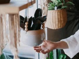 唐山人学起来:她往花盆加点这个 3天黄叶变绿叶