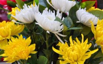 唐山:文明祭奠 鲜花祭扫 菊花俏销