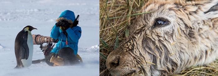人物 | 顾莹:用摄影尊重地球上的每一个生灵