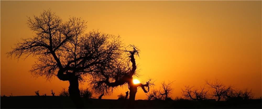 爱上内蒙古如此美丽的秋